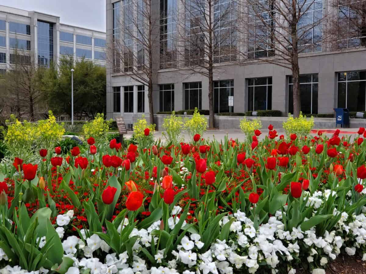 Plant bulbs in fall for a burst of spring color