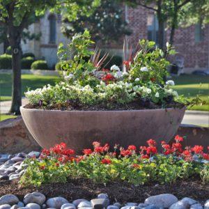 Eldorado Fairways spring color May 2020 5