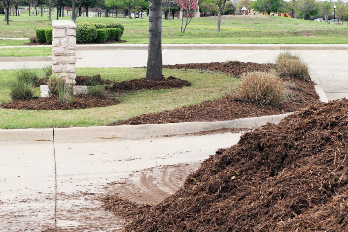 Add a 2-4 inch layer of fresh mulch to provide winter warmth and protection